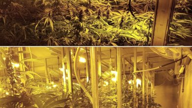 Photo of Dos detenidos en Camas en una operación contra la plantación de marihuana