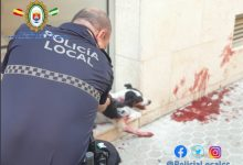 Photo of La Policía Local de Castilleja investiga un posible atropello a un perro con fuga