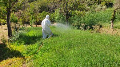 Photo of La Junta actuará contra el mosquito del Nilo sacando los trabajos a licitación