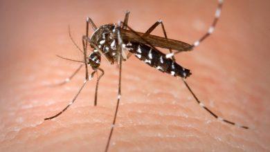 Photo of El Protocolo de Sistema de Alerta contra el virus del Nilo se compondrá de tres líneas de actuación