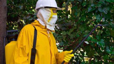 Photo of San Juan comienza mañana la fumigación contra el mosquito que desarrolla el virus del Nilo