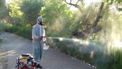 Photo of Castilleja realiza labores de fumigación en parques y zonas verdes como medida preventiva y extraordinaria frente al mosquito del virus del Nilo