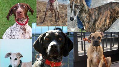 Photo of La cara 'B' del robo de perros: familias rotas que no pierden la esperanza