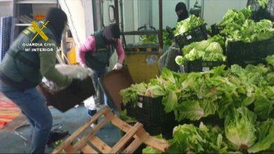 Photo of Incautados 155 kilos de marihuana y 60 kilos de hachís ocultos entre palets de verdura en Sevilla