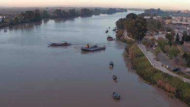 Photo of Coria del Río exige Reunión urgente a salud por el aumento de mosquitos que transmiten el virus del Nilo ante la inacción de la Junta