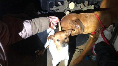 Photo of Pillados in fraganti cuando se disponían a abandonar a dos perros en Pilas