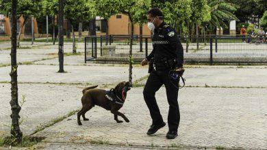 Photo of Kilo, el Perro que lucha contra el menudeo en Bormujos