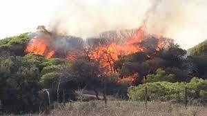 Photo of La Guardia Civil detiene al autor de un incendio forestal en el Corredor Verde del Guadiamar