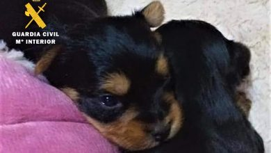 Photo of La Guardia Civil esclarece 6 estafas online en la venta de mascotas