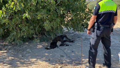 Photo of Muere un perro en Pilas tras ser abandonado en una finca atado a una cadena sin agua ni comida