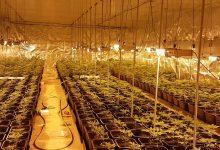 Photo of La Policía Nacional ha detenido a dos personas en una nueva operación contra el cultivo y tráfico de marihuana